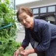 利用者様と一緒に育てた夏野菜を紹介します! あさひ園デイサー […]