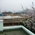 桜の花も満開となり、いよいよ春本番となりましたが、日本人っ […]