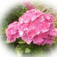 デイサービスの紫陽花見学 6月8日から一週間かけて、紫陽花見 […]