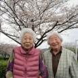 令和2年4月1日から7日までの一週間、桜見学に出掛けました。 […]