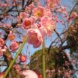 春の花が咲きました。   &nbsp […]