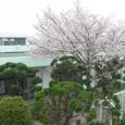 ぽかぽかと日差しが暖かくなり、桜満開の季節となり、あさひ […]